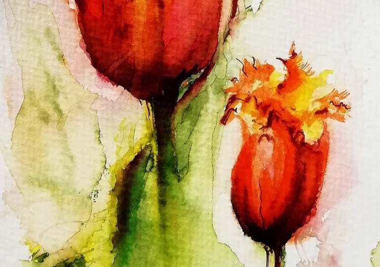 postcards from the garden 2020, tulips
