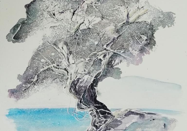 Sardinian olive tree