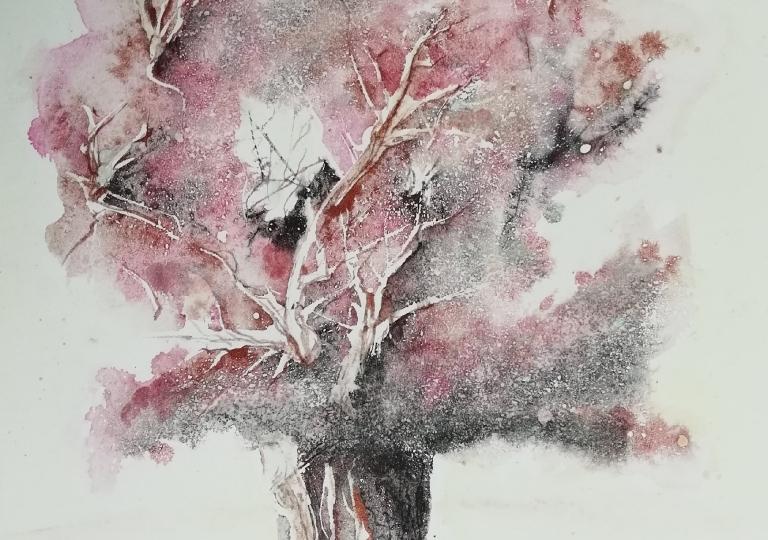 Tilston oak
